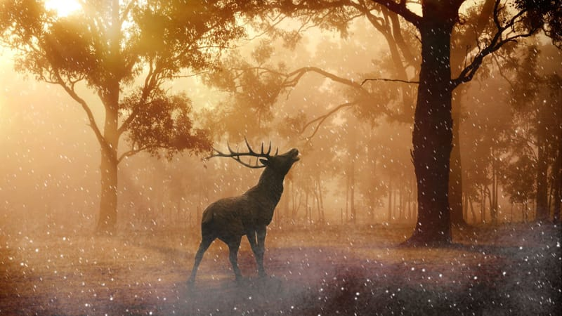 Beautiful Nature Theme Preview Image