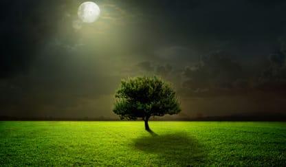 Beautiful Trees Theme