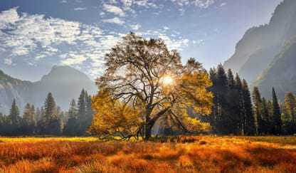 Yosemite National Park Theme